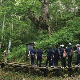 しなの木コース